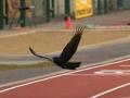 leevale-track-field-meet_14-04-12_1112_edited-1